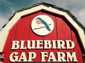 hampton, virginia, bluebird gap farm, united military travel, hampton roads