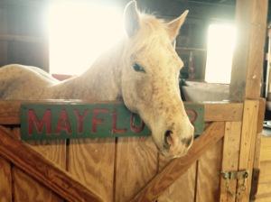 horse, bluebird gap farm, hampton, virigina