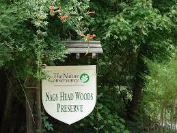 Nags Head Woods